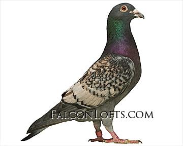 Toy stencil racing homer pigeon