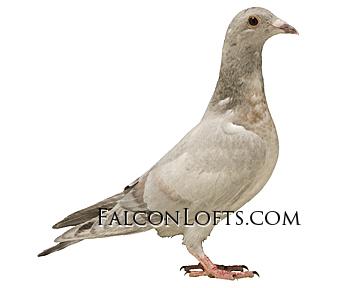 Falcon lofts Qualmond